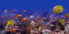 Koh Mukin vedenalainen maailma kiehtoo - http://www.rantapallo.fi/thaimaa/koh-muk/