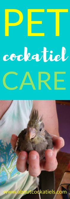 Pet Cockatiel Care tips