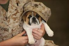 Soldier's Pup ♥