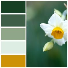 Created at Color Name Detector for iOS 173F24 - Cal Poly green 3E5E48 - Gecko 8FA688 - Agate Green DEEDE4 - White Bisque CD9205 - Goldenrod