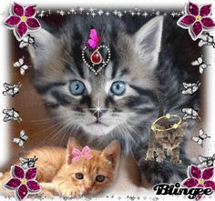 Cute Cats And Kittens, I Love Cats, Kittens Cutest, Pretty Cats, Beautiful Cats, Animal Pictures, Cute Pictures, Good Morning Animation, Gato Gif