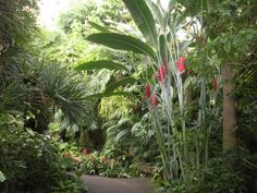 tropical plants for hedges | Tropical Trees, Shrubs, and Plants
