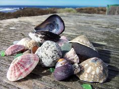 Shells and sea glass I found at Pebble Beach, October 2012.
