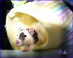 Lots of sewing patterns and tutorials for DIY rat beds and hammocks