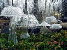 Punch Bowl Mushrooms