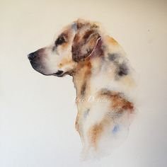 Labrador in watercolour by artist Jane Davies