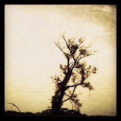 #tree #sepia