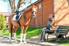 Untitled Horses For Sale, Sport, Equestrian, Animals, Business Tips, Advice, Sports, Horse, Deporte