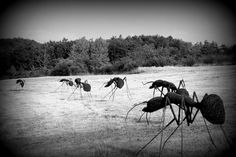 Prodigy!  Iron Wire Ants By David Vanorbeek