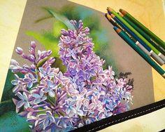 Попробовала снова реалистично порисовать, пока заживают пальцы после наждачки. Однако, не прет Почувствовала вкус экспрессии и реализм отошел на второй план. Жду не дождусь, когда смогу снова помахать мечом (зачеркнуто) мелком #сирень #цветы #topcreator #softpastel #drawing #pastel #flowers #lilac #realistic