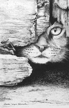 Hiding cat - pen and ink drawing - 30 x 40 cm by Claude Lagny-Edwards Hiding cat - pen and ink drawi Cool Art Drawings, Pencil Art Drawings, Art Drawings Sketches, Ink Illustrations, Pencil Sketches Landscape, Landscape Drawings, Animal Sketches, Animal Drawings, Cat Pen