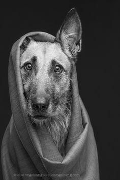 Hazel the wayfarer by Elke Vogelsang on 500px