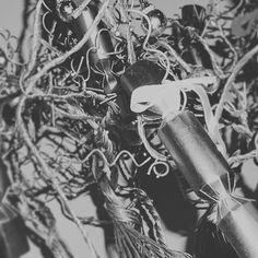 Xmas tree closeup Xmas Tree, Close Up, Instagram Posts, Photos, Pictures, Christmas Tree, Xmas Trees, Christmas Trees