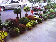 Un jardín en la ciudad,exterior de la floristeria Vinaflor,Vinaroz.