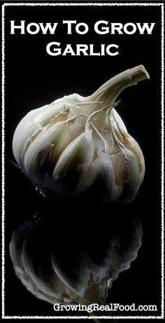 How To Grow Garlic | http://GrowingRealFood.com #gardening.♔✨Carolyn3sixty ♔✨