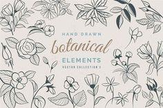 Hand Drawn Botanical Elements by Solana on @creativemarket