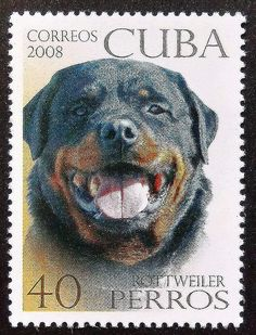 Rottweiler Dog . Postage Stamp from Cuba, 2008