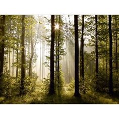 Fotomural de un bosque