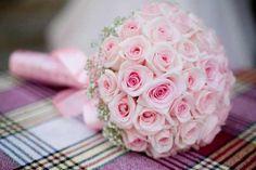 Rosa.jpg (640×426)
