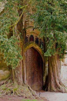 Tree House Door