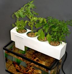Another Small Aquaponics System for the Not So Handy: The Blue Green Box