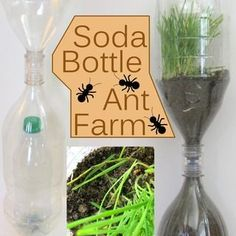 Soda Bottle Ant Farm: 10 Steps (with Pictures) Preschool Science, Science For Kids, Activities For Kids, Crafts For Kids, Science Ideas, Science Activities, Summer Crafts, Farm Projects, Science Projects