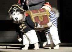 funny dog outfit