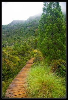 Cradle Mountain National Park, Tasmania, Australia   - Explore the World with Travel Nerd Nici, one Country at a Time. http://TravelNerdNici.com