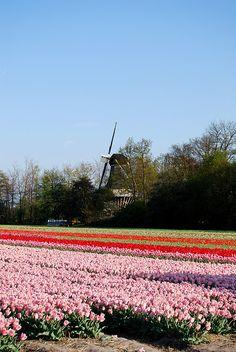 Keukenhof,  Lisse, Holland