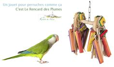 Le Rouleau Parrot, Bird, Outdoor Decor, Animals, Home Decor, Budgie Toys, Budgies, Parrots, Wooden Toys