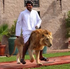 People getting taken for walks by their pets.   35 Things You See Every Day In Dubai