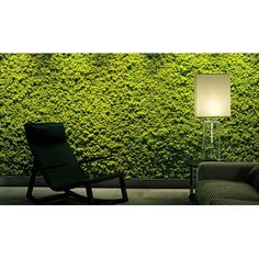 Mur végétal en lichen stabilisé