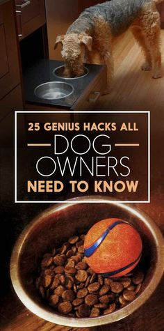 Genius Hacks That Make Having A Dog So Much Easier Struggling with a new pup? Check out these 5 genius hacks that make having a dog so much easier.Struggling with a new pup? Check out these 5 genius hacks that make having a dog so much easier. Dog Hacks, Hacks Diy, Baby Hacks, Dog Eating, New Puppy, Dog Care, Puppy Care, Dog Owners, Dog Mom