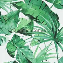 Exotic green leaves on white