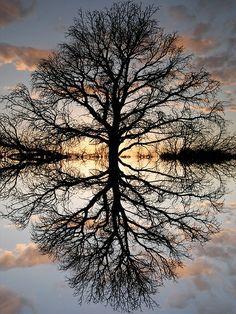 30 Beautiful Photos of Water Reflection – #cop21 #globalwarming #climatechange More at http://www.GlobeTransformer.org