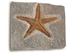 FOSSIL MUSEUM - SY0100: STARFISH