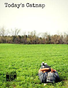 Today's Catnap - Eightymillion Photography - Illinois cornfield