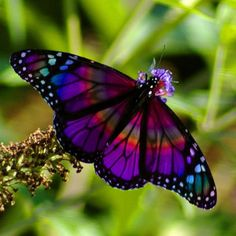 real butterflies in nature - Google Search