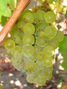 VINODABERE / Winetodrink  /  酒饮 /  вино пить / vinho para beber: La dichiarazione dell'azienda TIARE VINI sul probl...