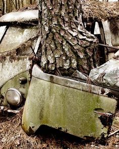 Green VW Bus eaten by Tree Photograph on Etsy, $15.00