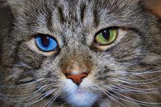 ஜ ۩۞۩ ஜ ஜ ۩۞۩ ஜ Azulestrellla: Images of beautiful cats ► ◄