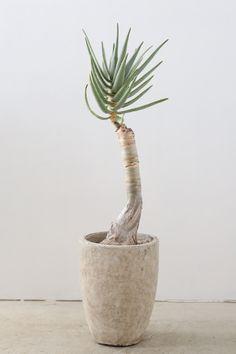 誰でも育てられるオシャレな観葉植物・サボテン・多肉植物と雑貨の通販・販売 ayanas(アヤナス)