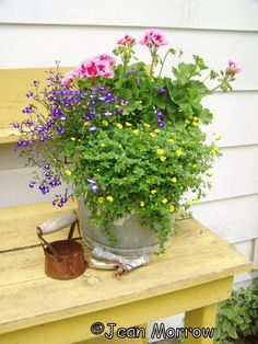 Jean Butcher Morrow  Just an old bucket with some flowers planted in it. It is called American Rose Mega Splash and it performs the best of all my geraniums…
