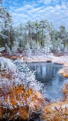 First Snow - Winter