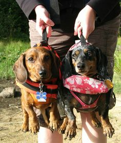 Wieners are ready for the canoe.