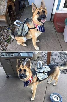Fallout Cosplay, Fallout 3, Dogmeat Fallout, Fallout Costume, Fallout Facts, Fallout Props, Fallout New Vegas, Epic Cosplay, Anime Cosplay