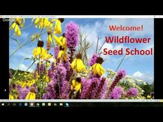 Webinar Replay: Miriam Goldberg of The Wildflower Farm shares her tips, starting seeds and feeding Authentic Haven Brand to create your own Wildflower garden own Wildflower Seeds, Seed Starting, Replay, Wild Flowers, Create, Garden, Tips, Garten, Advice