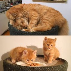 They grow up so fast! by TDX cats kitten catsonweb cute adorable funny sleepy animals nature kitty cutie ca