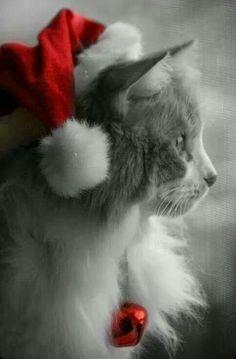 Meowy Christmas! >^..^