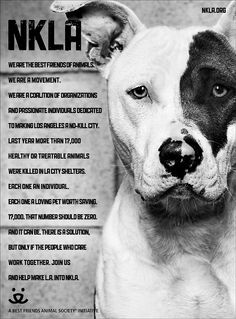 """""""No Kill"""" Campaign  We can do this !!! My Luna came from an LA shelter this could have been her :/ breaks my heart"""